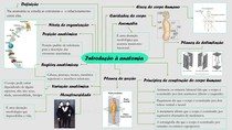 Introdução à anatomia(mapamental)1 0