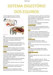 Sistema Digestório dos Equinos