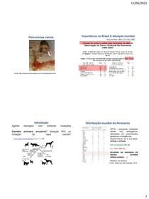 Roteiro infecciosas Parvovirose