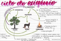 Ciclo do Oxigênio - Ficha - @matsumurastudies