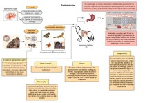 Diagrama de Espirocercose (1)