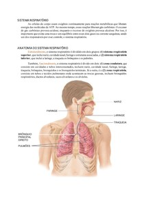 Resumo anatomia e fisiologia do sistema respiratório