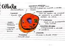 célula eucariotica