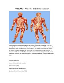 Resumo Anatomia Do Sistema Muscular Anatomia Humana I
