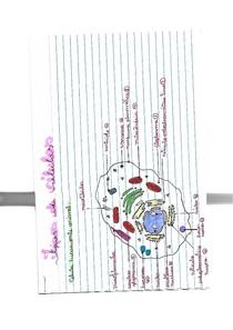 célula animal e procarionte