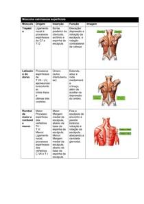músculos do dorso