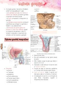 Sistema Genital - Anatomia reprodutora