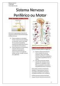 Transcrição da aula - Sistema nervoso Periférico eferente ou motor