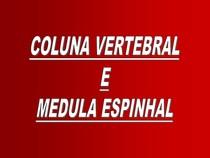 3- Coluna vertebral