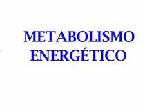 Aula - Metabolismo