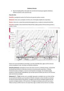 Dinâmica Folicular Bovina - gráfico