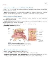 Olfação - fisiologia
