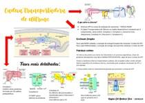 Cadeia transportadora de elétrons e ciclo de Krebs