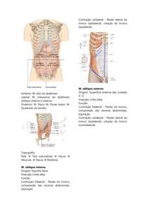 Parede abdominal, intestino delgado e grosso reto e ânus