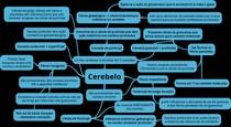 Cerebelo - PARTE 2