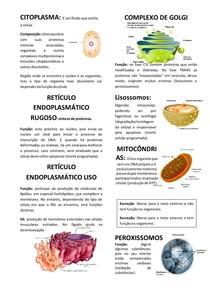 Componentes da Célula