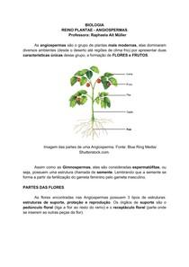 REINO PLANTAE - ANGIOSPERMAS