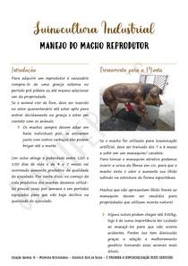 Suinocultura Industrial: Manejo Reprodutivo de Machos