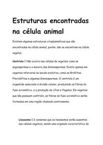 Estrutura Células Animais