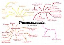 Mapa mental processamento de ração