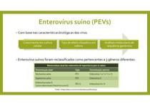 Enterovírus suíno 1 a 13 (Teschovírus, Sapelovírus)