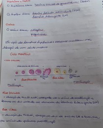 Ciclo menstrual parte 2 - hipotálamo e hipófise