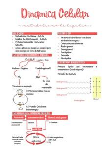 DC - Metabolismo de lipídios