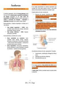 Anatomia - vias respiratórias