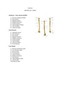 Anatomia Antebraço
