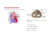 Doenças do Sistema Cardiopulmonar