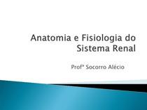 anatomia renal e fisiologia