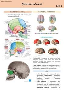 Sistema Nervoso - Parte 2