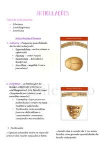 Anatomia Humana: Articulações