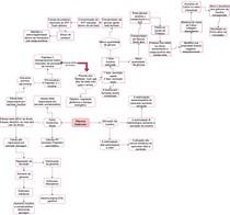 Pâncreas Endócrino (Pt.1)