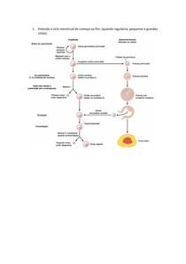 SP2 - Saúde da mulher CICLO MENSTRUAL