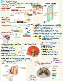 Resumo Teórico Básico (1ª semestre) - Anatomia do Sistema Nervoso Central