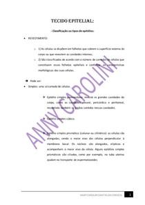 TECIDO EPITELIAL - CLASSIFICAÇÃO