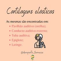 Cartilagens elásticas