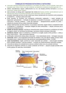 Formação do Processo Notocordal e Notocorda - Semana 3 do Desenvolvimento Embrionário