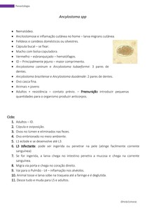 Parasitologia -Ancylostoma spp