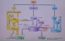 Mecanismo dos macronutrientes no organismo