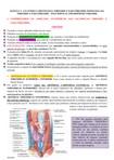 Resumo Anatomia, Fisiologia e Histologia das glândulas Tireoide e Paratireoide