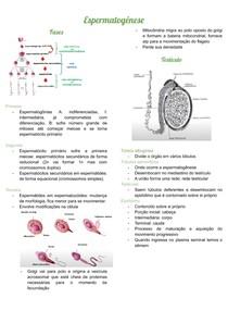 Espermatogênese docx