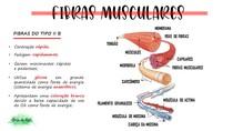 fibras musculares- part.2