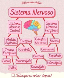 Divisões do Sistema Nervoso - @biaresumosdafisio