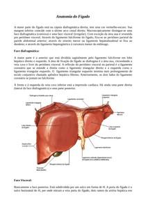 Anatomia do fígado