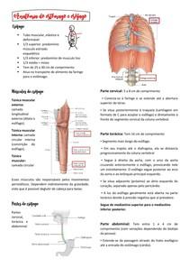 Anatomia do estômago e esôfago