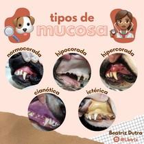 Tipos de Mucosa