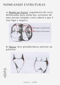 Anatomia do dente - nomeando estruturas