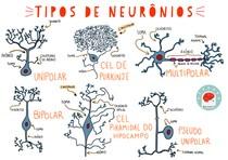 MAPA MENTAL - TIPO DE NEURÔNIO